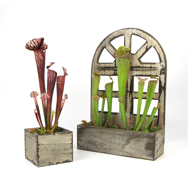 wooden-potted-faux-sarracenia-pitcher-plant-main