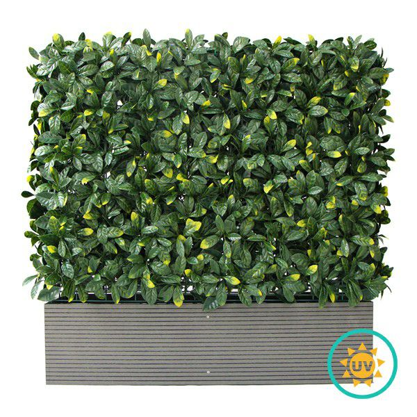 A003 Artificial Box Hedge Planters with Laurel Foliage