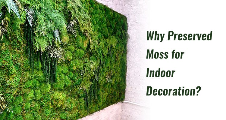 Why Preserved Moss for Indoor Decoration
