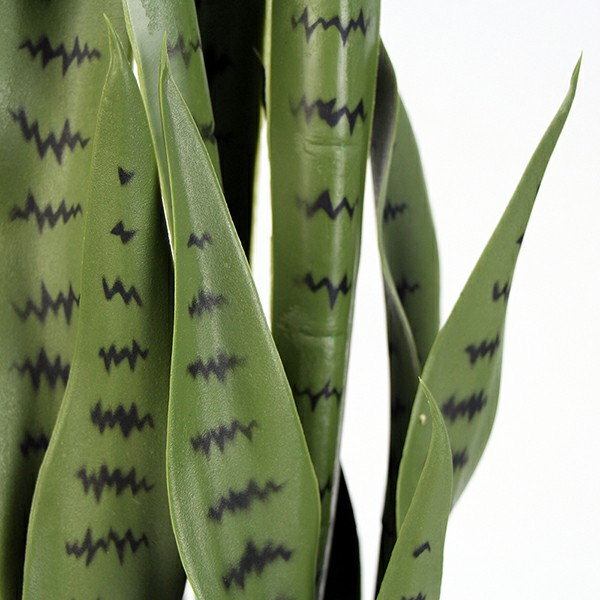 fake snake plant leaves