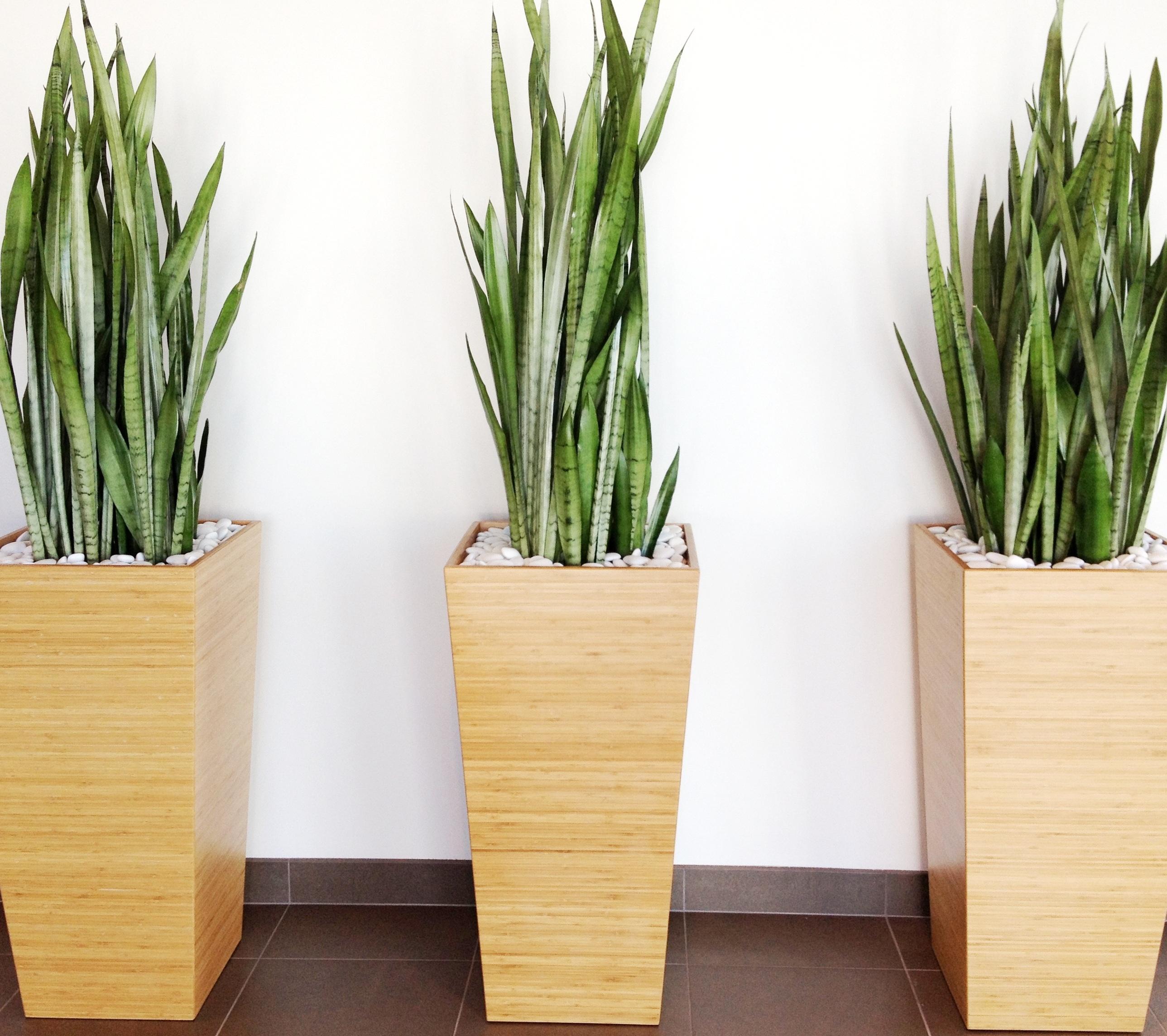 Pics For > Modern Tall Indoor Plants