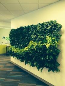 Plantfolio - Plantscapers