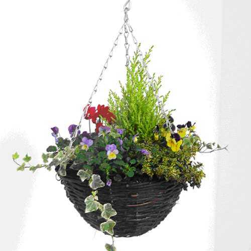 Cheap Planted Winter Hanging Baskets Online Buy Winter