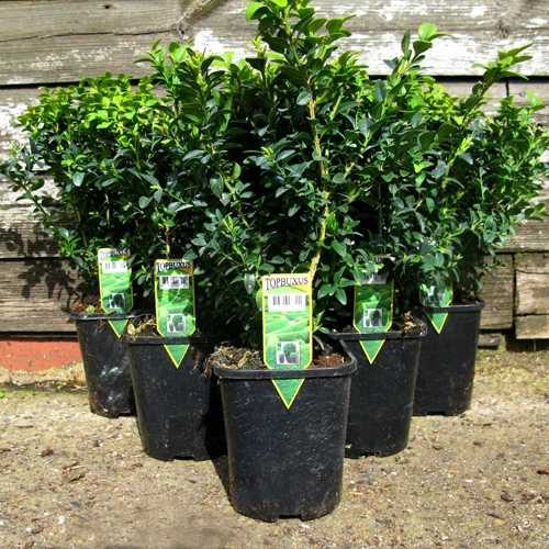 Afk Garden Planters