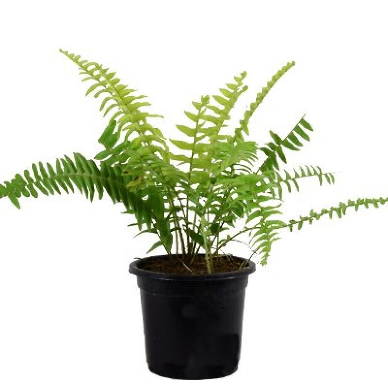 Cheap Rectangular Planters