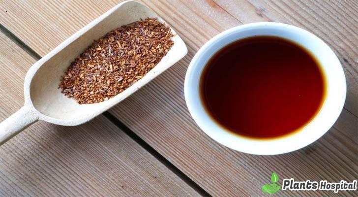 "honeybush-tea-benefits ""width ="" 728 ""height ="" 400 ""srcset ="" https://i0.wp.com/www.plantshospital.com/wp-content/uploads/2019/08/honeybush-tea-benefits.jpg?w=1140&ssl=1 728w, https: //www.plantshospital.com/wp-content/uploads/2019/08/honeybush-tea-benefits-300x165.jpg 300w ""tamaños ="" (ancho máximo: 728px) 100vw, 728px ""> <figcaption id="