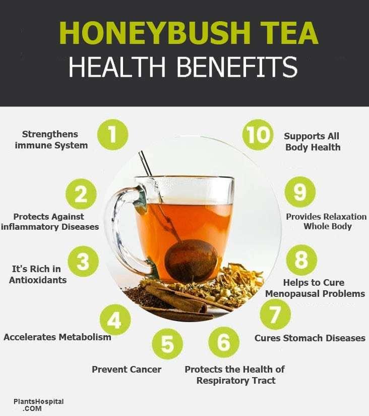 """honeybush-tea-graphic """"width ="""" 732 """"height ="""" 824 """"srcset ="""" https://i0.wp.com/www.plantshospital.com/wp-content/uploads/2019/08/honeybush-tea-graphic.jpg?w=1140&ssl=1 732w, https: //www.plantshospital.com/wp-content/uploads/2019/08/honeybush-tea-graphic-267x300.jpg 267w """"tamaños ="""" (ancho máximo: 732px) 100vw, 732px """"></p> <h3>6. Protege la salud del tracto respiratorio</h3> <p>Casi todos experimentan problemas respiratorios, incluso una vez al año, las enfermedades respiratorias se pueden prevenir consumiendo <strong>té de miel</strong>.</p> <p>Los expertos dicen <strong>té de miel</strong> Es eficaz en todos los problemas respiratorios y especialmente en la reducción de los síntomas de asma. En el mismo contexto, <strong>té de miel</strong> puede usarse para la prevención y el tratamiento de la tos y los resfriados estacionales o infecciosos y reacciones alérgicas relacionadas.</p> <p>Se sabe que ayuda a eliminar los gérmenes que causan enfermedades debido a sus propiedades antibacterianas y antivirales.</p> <div class="""