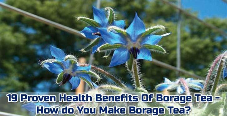 "beneficios-té-borraja ""ancho ="" 728 ""altura ="" 371 ""srcset ="" https://i0.wp.com/www.plantshospital.com/wp-content/uploads/2019/09/borage-tea-benefits-1.jpg?w=1140&ssl=1 728w, https://www.plantshospital.com/wp-content/uploads/2019/09/borage-tea-benefits-1-300x153.jpg 300w ""tamaños ="" (ancho máximo: 728px) 100vw, 728px ""></p> <h2>Tipos de té de borraja</h2> <p><strong>Borrage officinalis</strong> conocido como <strong>planta de borraja</strong>, hay diferentes tipos del mismo nombre. Borrage officinalis <em>""Variegata""</em> Es notable por el plumaje blanco en las ramas.</p> <div class="