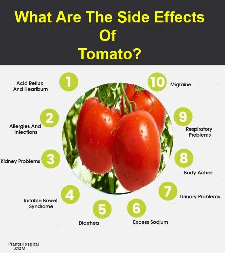 """efectos secundarios del gráfico de tomate """"width ="""" 732 """"height ="""" 824 """"srcset ="""" https://www.plantshospital.com/wp-content/uploads/2019/10/side-effects-of-tomato -graphic.jpg 732w, https://www.plantshospital.com/wp-content/uploads/2019/10/side-effects-of-tomato-graphic-267x300.jpg 267w """"tamaños ="""" (ancho máximo: 732px ) 100vw, 732px """"src ="""" https://www.plantshospital.com/wp-content/uploads/2019/10/side-effects-of-tomato-graphic.jpg """"class ="""" wp-image-3782 size- full lazyload """"></p><p> <noscript><img class="""