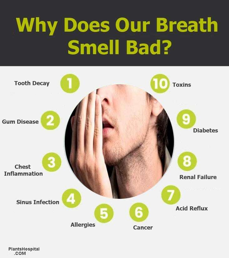 """Why-does-our-breath-small-bad """"width ="""" 732 """"height ="""" 824 """"srcset ="""" https://www.plantshospital.com/wp-content/uploads/2019/11/Why-does-our -breath-small-bad.jpg 732w, https://www.plantshospital.com/wp-content/uploads/2019/11/Why-does-our-breath-small-bad-267x300.jpg 267w """"tamaños ="""" (ancho máximo: 732px) 100vw, 732px """"src ="""" https://www.plantshospital.com/wp-content/uploads/2019/11/Why-does-our-breath-small-bad.jpg """"class = """"wp-image-3916 size-full lazyload""""></p><p> <noscript><img class="""