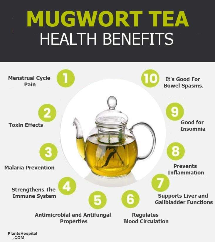 "mugwort-tea-benefits-graphic ""width ="" 732 ""height ="" 824 ""srcset ="" https://www.plantshospital.com/wp-content/uploads/2019/11/mugwort-tea-benefits-graphic.jpg 732w, https://www.plantshospital.com/wp-content/uploads/2019/11/mugwort-tea-benefits-graphic-267x300.jpg 267w ""tamaños ="" (ancho máximo: 732px) 100vw, 732px ""src = ""https://www.plantshospital.com/wp-content/uploads/2019/11/mugwort-tea-benefits-graphic.jpg"" class = ""alignleft wp-image-3940 size-full lazyload""></p><p> <noscript><img class="