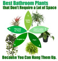 Best Plants for Bathroom Decor - and My Favorite...