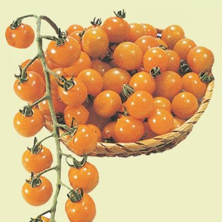 tomato golden cherry cherry tomato seeds
