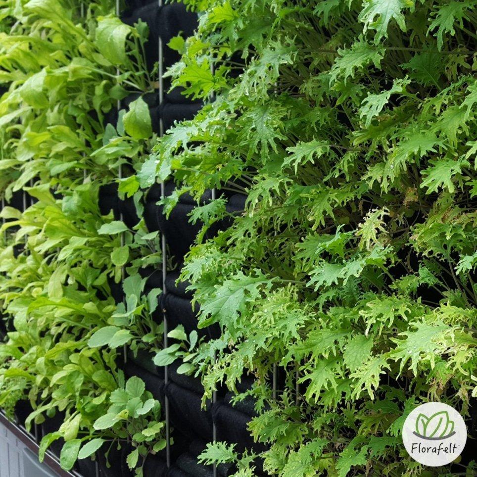 Florafelt Pro System Aquaponics Vertical Garden