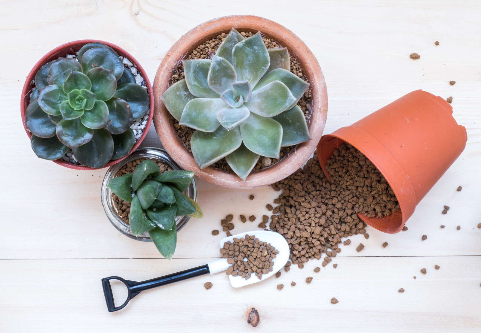 Sukkulenten Vermehren Pflegen Amp Pflanzen