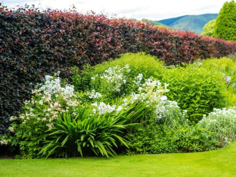 sichtschutz fuer garten pflanzen als sichtschutz: unsere top  f�r garten & balkon