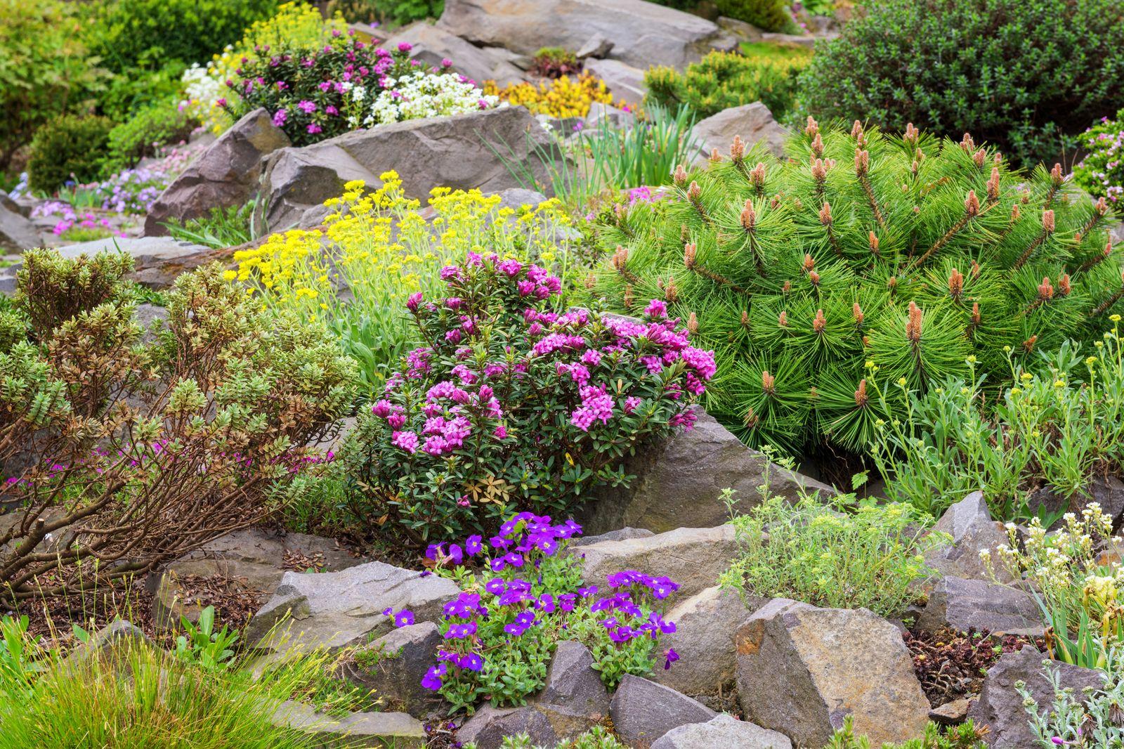 Pflanzen fr den Steingarten Unsere Top 10  Plantura
