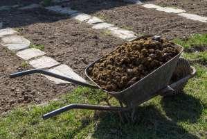 Organischer Rasendünger Vorteile von natürlichem Dünger ...
