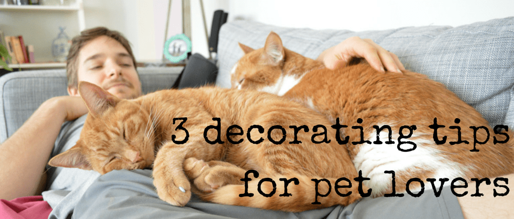 3 decorating tips for pet lovers -- Plaster & Disaster