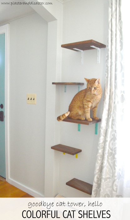 Cat Shelves Yes You Read That Right Plaster Disaster