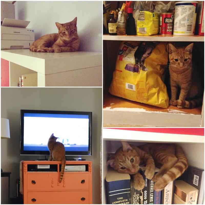 Cat shelf disaster -- Plaster & Disaster