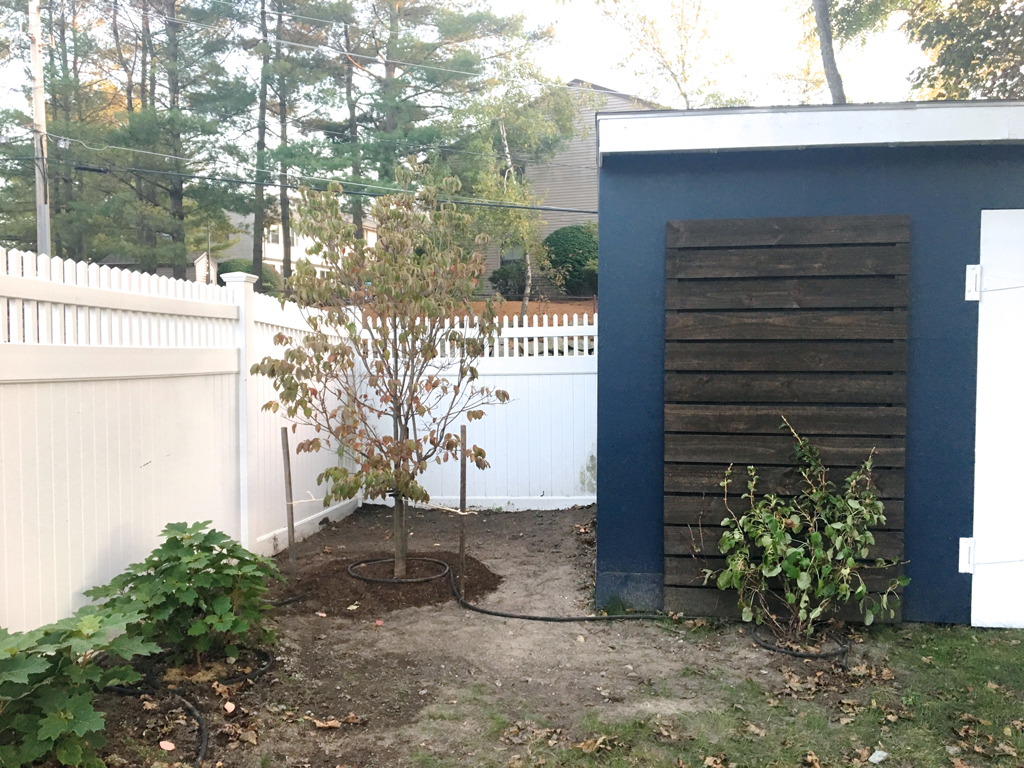 Planting and mulching -- Plaster & Disaster