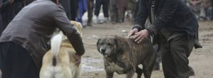 Reports Suggest Facebook Is Used To Promote Dog Fighting