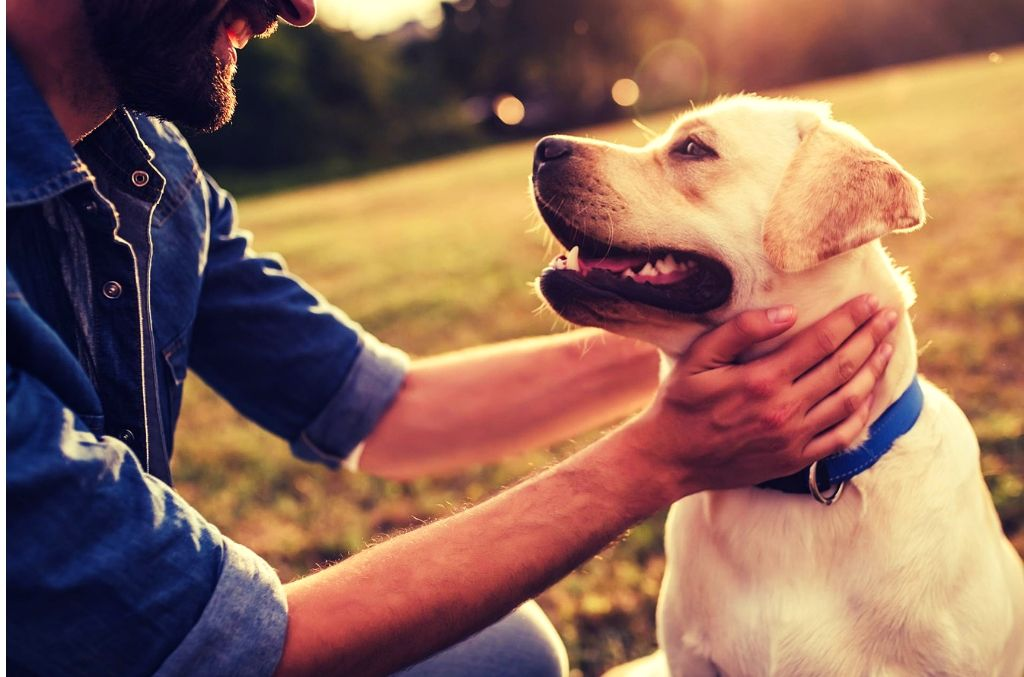 Owning a dog is deeper than you think