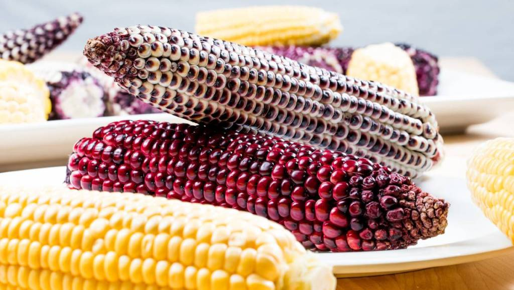 what-good-does-corn-do-to-the-body