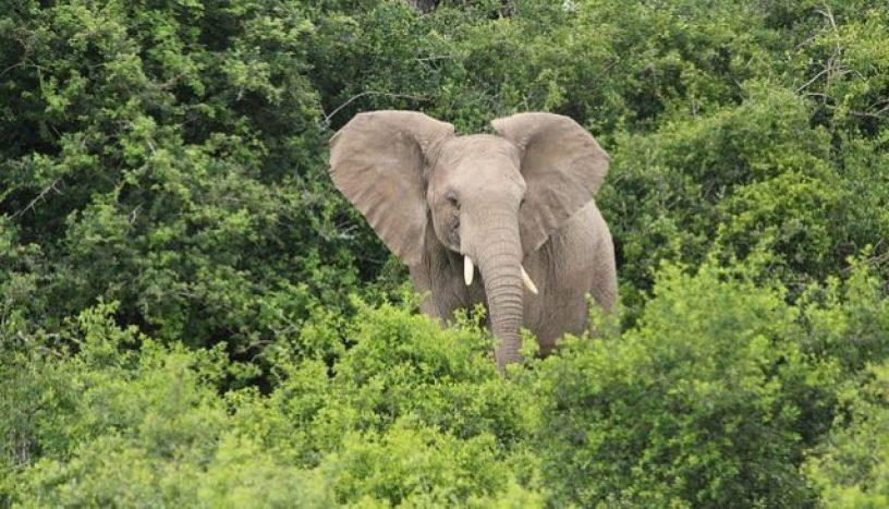 Omo Reserve Elephant