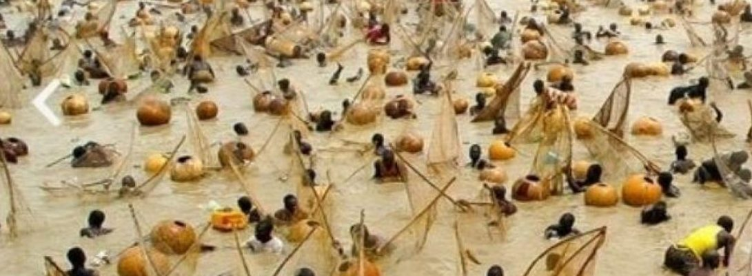 See The History Of The Argungu Fishing Festival Of Kebbi State