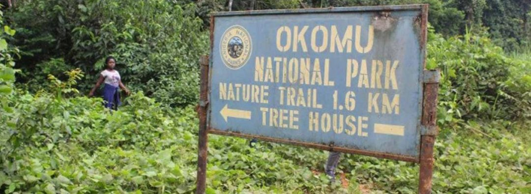 Experience Nature Like Never Before At Okomu National Park