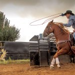Rodeo Horse Nutrition And Supplements