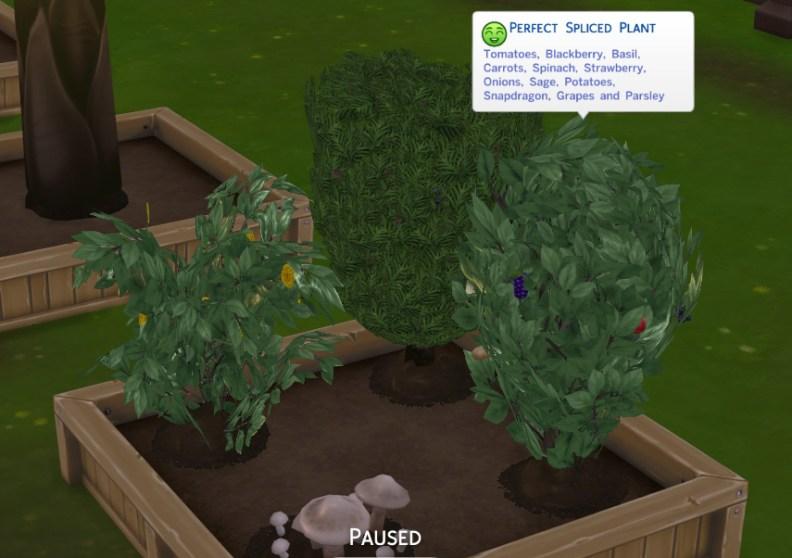 Multi-plant
