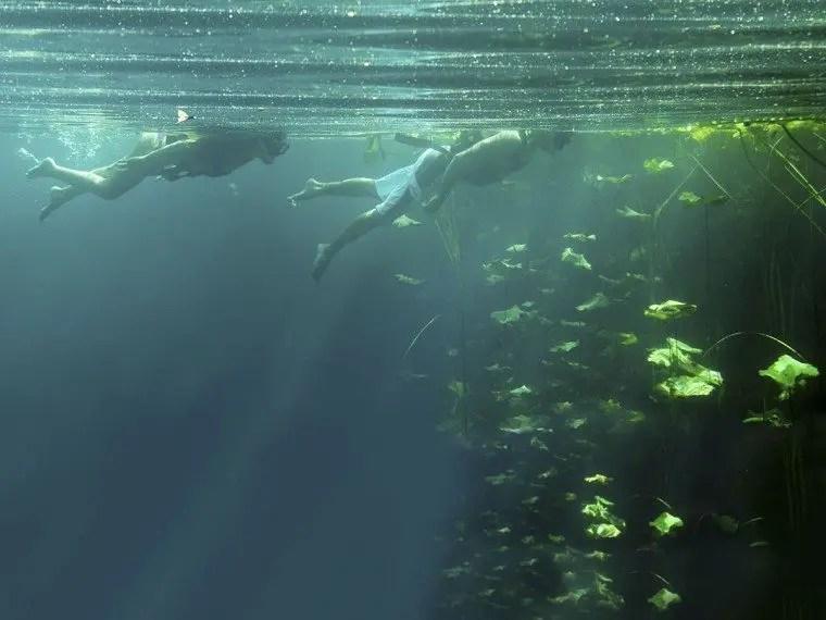Snorkelers observe the marina flora at Xenotes Park cenote in the Riviera Maya