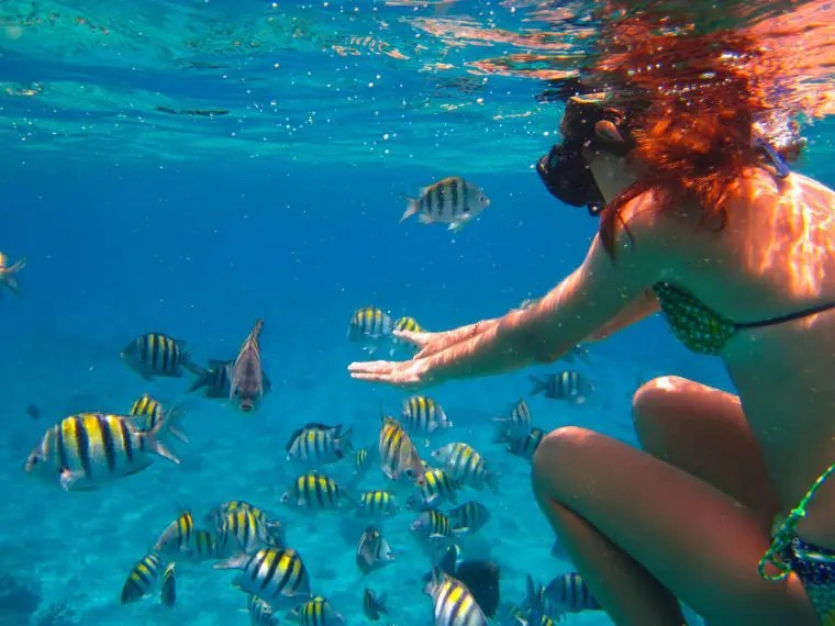 Hotel Cozumel And Resort Area To Enter Exit The Water For Snorkeling Diving