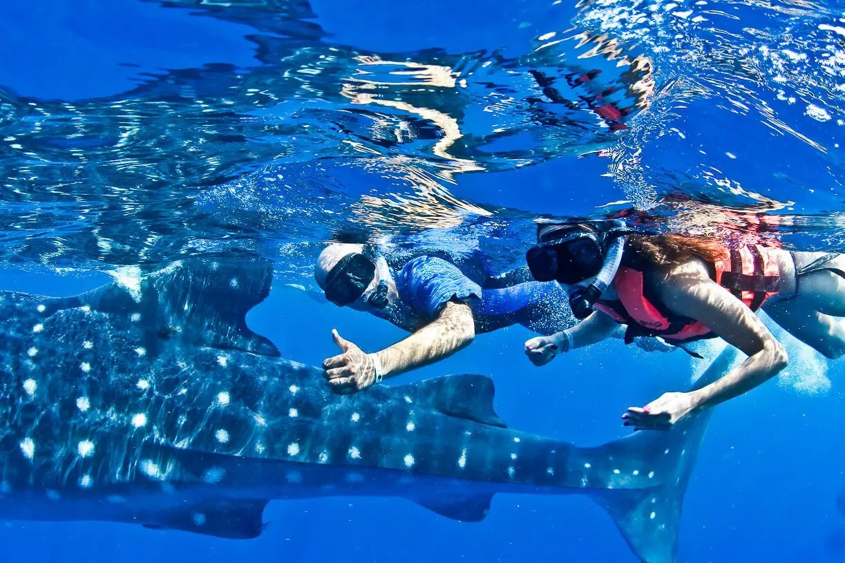 Top 10 Tips – Whale Shark Tours from Playa del Carmen 2018