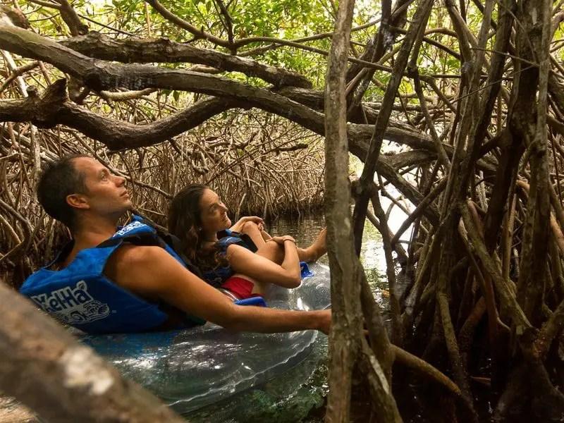 Xel-Ha mangroves