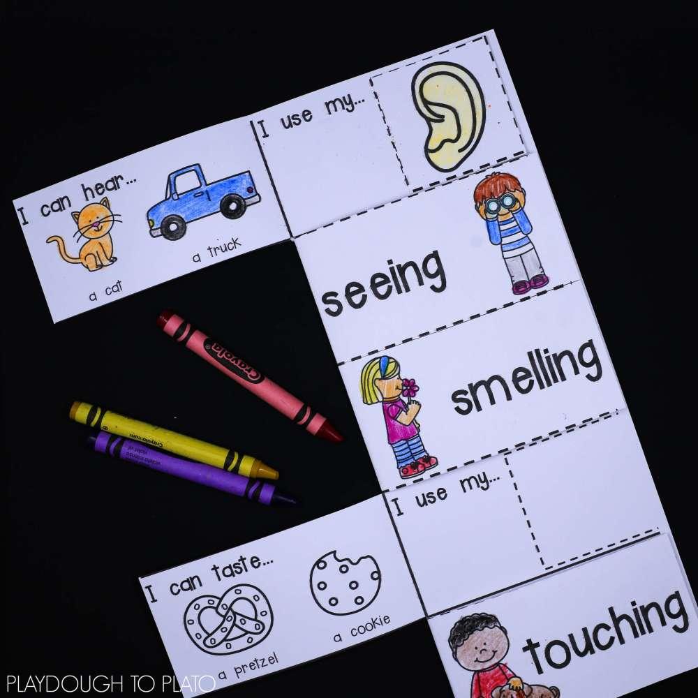 medium resolution of 5 Senses Activity Pack - Playdough To Plato