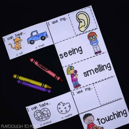 small resolution of 5 Senses Activity Pack - Playdough To Plato