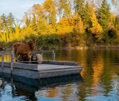 First Cow: la svolta gentile della selvaggia frontiera americana