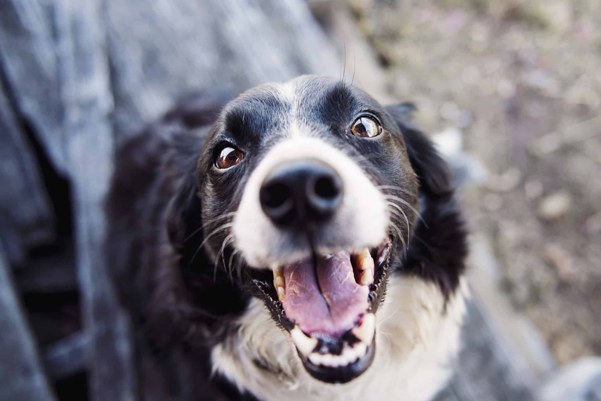 84 Quotes About Dogs That Will Make You Happy You're A Dog ...