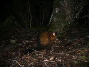 © Romain Dondelinger Tasmanie Lake st clair 1