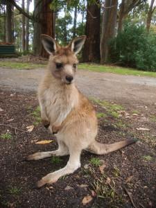 © Romain Dondelinger Tasmanie Mole Creek 10