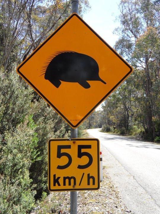 roadsign-australie-whv-2 ©Romain Dondelinger - PlayingTheWorld