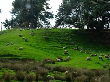 ©playingtheworld-nouvelle-zelande-hobbiton-voyage-6