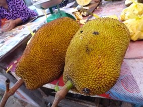 Le Durian, partout !