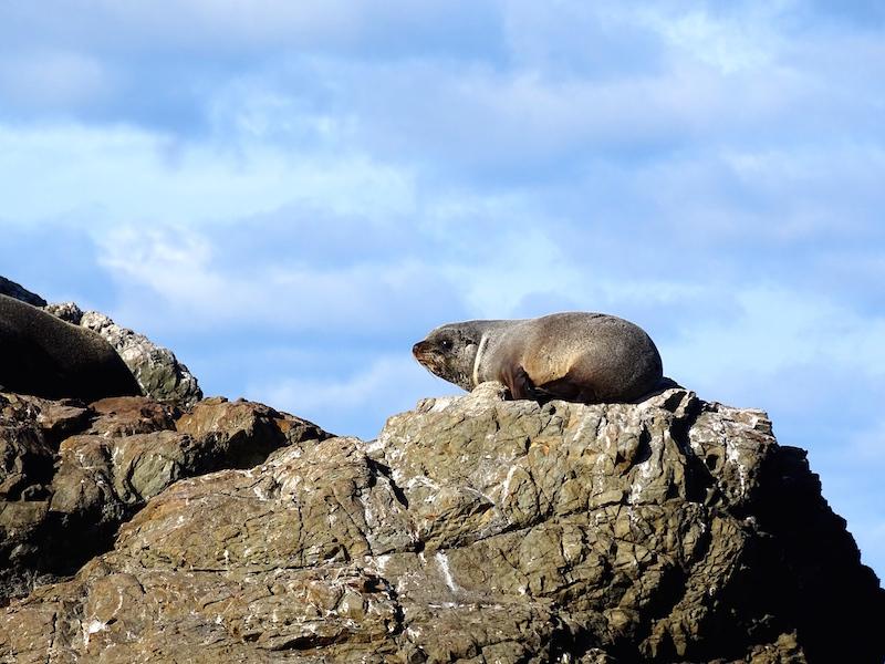 ©playingtheworld-nouvelle-zelande-kaikoura-dauphin-voyage-16