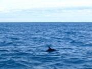 ©playingtheworld-nouvelle-zelande-kaikoura-dauphin-voyage-7