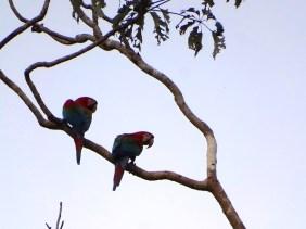 playingtheworld-bolivie-foret-amazonie-selva-rurrenabaque-voyage-65